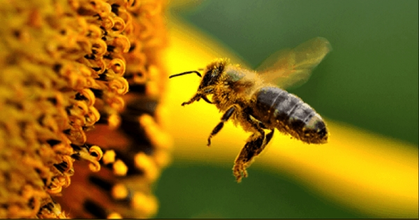 Bees are miraculous! They are responsible for almost 1 out of every 3 bites we eat, but are vanishing under a rain of toxic pesticides. The US is finally considering action on bee-killing chemicals. But without strong public support the agrichemical lobby will block it. Join the call to save bees!