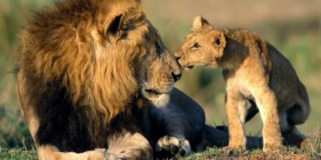 ΕΕ και ΗΠΑ, σώστε τα λιοντάρια της Αφρικής!