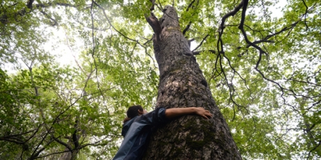 Olympic Committee: Stop Ancient Forest Destruction