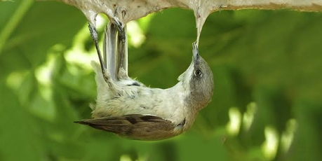Stop au massacre de nos oiseaux