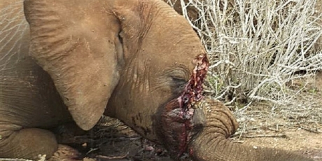 Yahoo - stop your deadly ivory trade!
