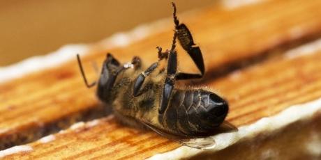 Aux députés et sénateurs: mettez fin au massacre des abeilles