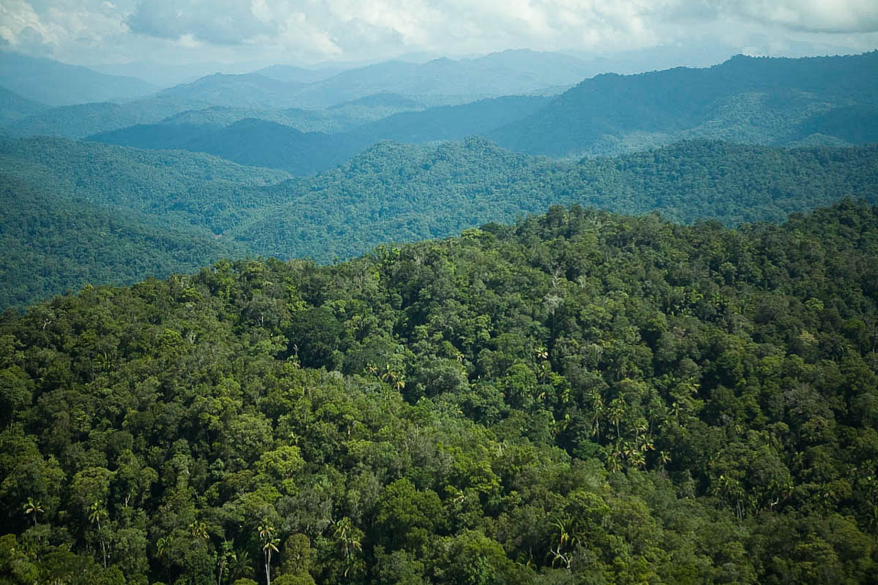 Borneo Valida