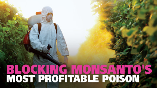 Blocking Monsanto's most profitable poison