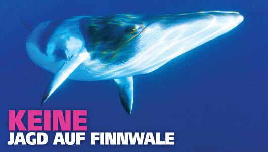 Keine Jagd auf Finnwale