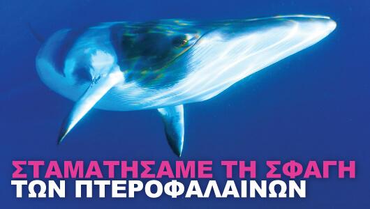 Σταματήσαμε τη σφαγή των πτεροφαλαινών