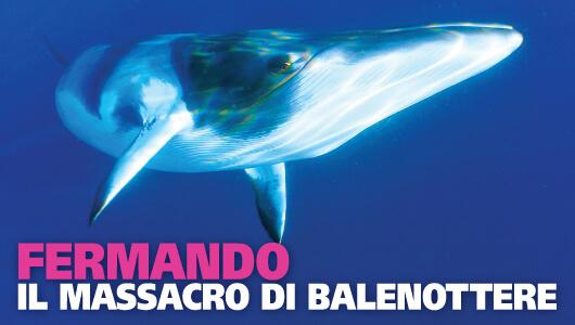 Fermando il massacro delle balenottere