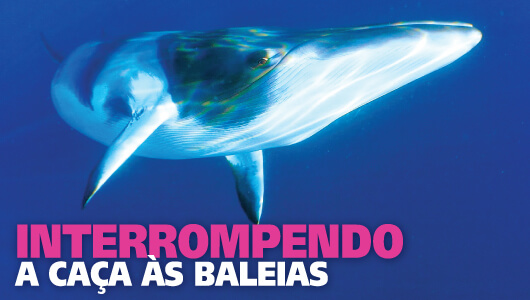 Libertem as baleias