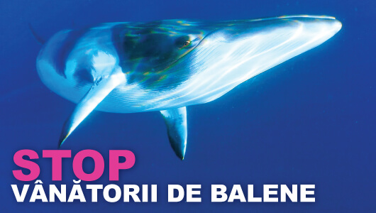 Stopping fin whale slaughter
