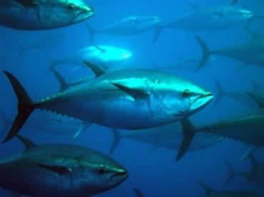 Here Are The Most Popular Types Of Tuna Used In Japanese Cuisine